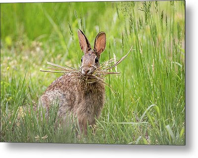 Gathering Rabbit Metal Print by Terry DeLuco