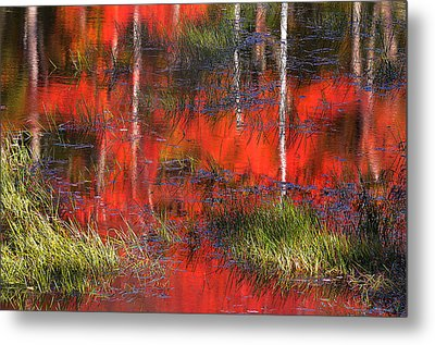 Gatineau Marsh Fall Colors Metal Print