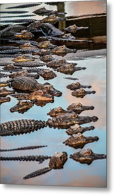 Gator Pack Metal Print by Josy Cue