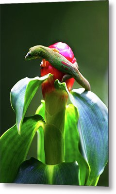 Metal Print featuring the photograph Gecko #3 by Anthony Jones