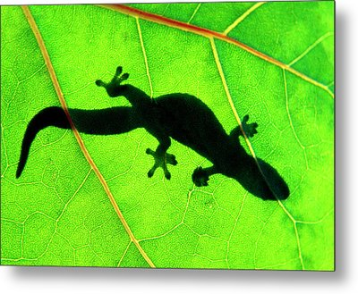 Gecko Silhouette On Green Leaf, North Shore, 1998 Metal Print by Sean Davey