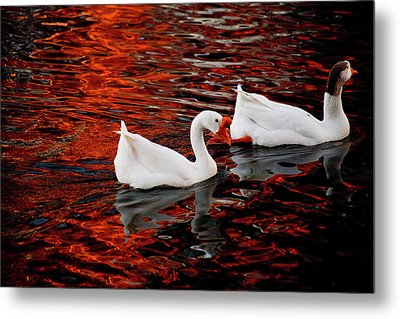 Geese At Lady Bird Lake Metal Print by Mark Weaver