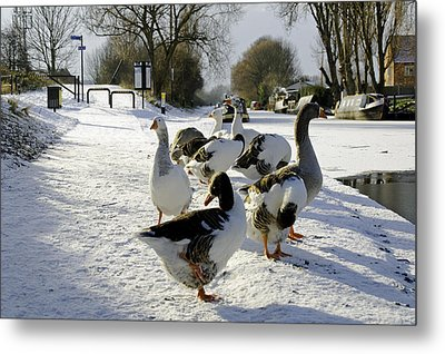 Geese At The Frozen Horninglow Basin Metal Print by Rod Johnson