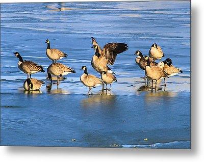 Geese On Ice Metal Print