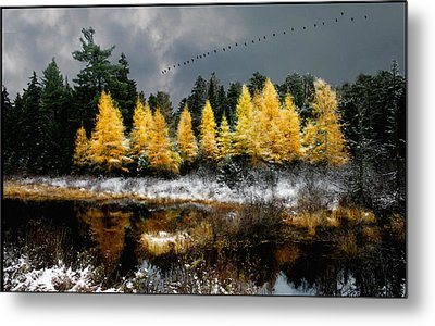 Geese Over Tamarack Metal Print