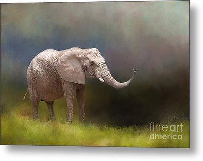 Gentle Giant Metal Print by Kathleen Rinker