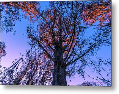 Gentle Giant Metal Print by Marvin Spates