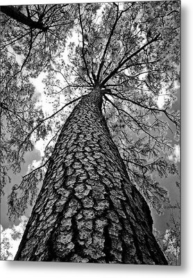 Georgia Pine Metal Print by Dan Wells