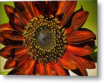 Gerber Daisy Full On Metal Print