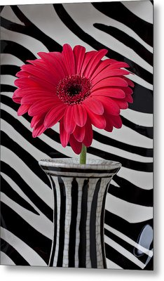 Gerbera Daisy In Striped Vase Metal Print by Garry Gay