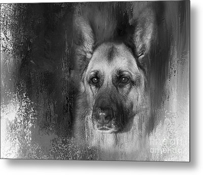 German Shepherd In Black And White Metal Print