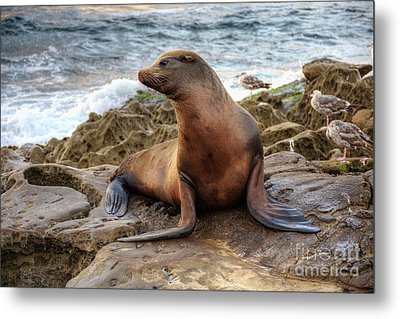 Metal Print featuring the photograph Get My Good Side by Eddie Yerkish