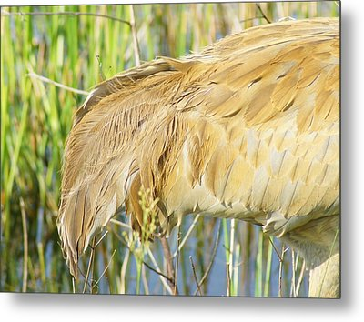 Metal Print featuring the photograph Get Some Tail by Lynda Dawson-Youngclaus
