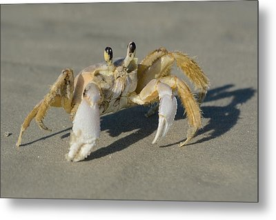 Metal Print featuring the photograph Ghost Crab by Bradford Martin