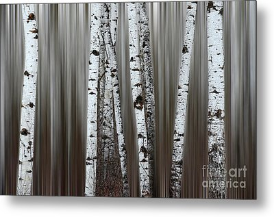 Metal Print featuring the photograph Ghost Forest 1 by Bob Christopher