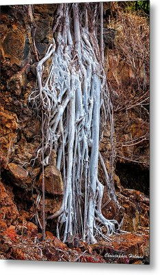 Ghostly Roots Metal Print by Christopher Holmes