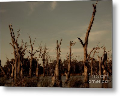 Metal Print featuring the photograph Ghostly Trees by Douglas Barnard