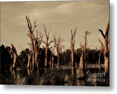 Metal Print featuring the photograph Ghostly Trees V2 by Douglas Barnard