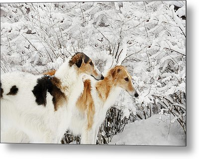 giant Borzoi hounds in winter Metal Print by Christian Lagereek