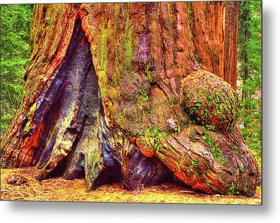 Giant Sequoia Base With Fire Scar Metal Print