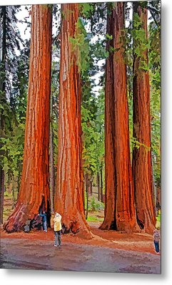 Giant Sequoias Metal Print by Dennis Cox