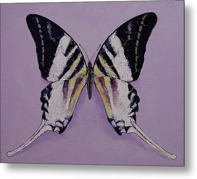Giant Swordtail Butterfly Metal Print by Michael Creese