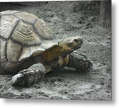 Metal Print featuring the photograph Giant Tortoise by Laura DAddona
