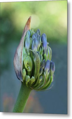 Gift Wrapped  Metal Print