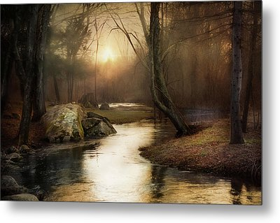 Metal Print featuring the photograph Gilded Woodland by Robin-Lee Vieira