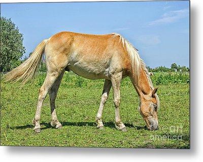 Ginger Horse Eating Grass Metal Print
