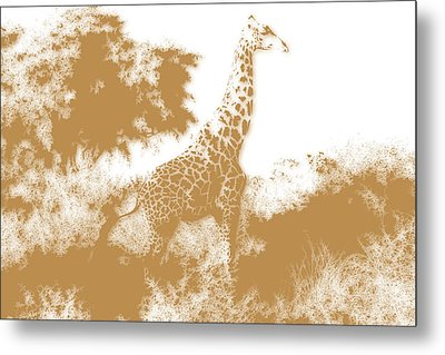 Giraffe 2 Metal Print by Joe Hamilton