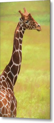 Giraffe - Backward Glance Metal Print