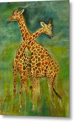 Lovely Giraffe . Metal Print by Khalid Saeed