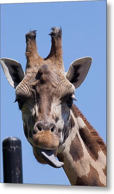 Metal Print featuring the photograph Giraffe by JT Lewis