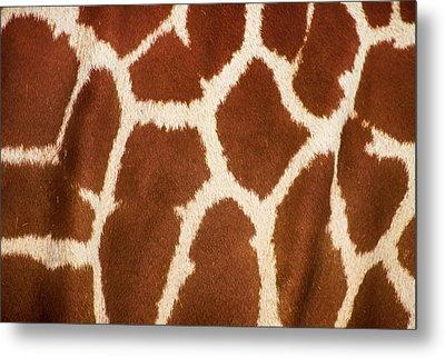 Giraffe Textures Metal Print by Martin Newman