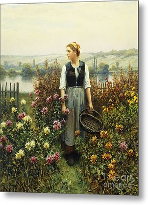 Girl With A Basket In A Garden Metal Print by Daniel Ridgway Knight