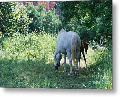 Giverny Mare And Foal Landscape Metal Print by Nadine Rippelmeyer