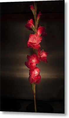 Metal Print featuring the photograph Gladioli_variation#4 by Richard Wiggins