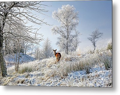 Glen Shiel Misty Winter Deer Metal Print by Grant Glendinning