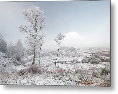 Glen Shiel Misty Winter Trees 2 Metal Print by Grant Glendinning