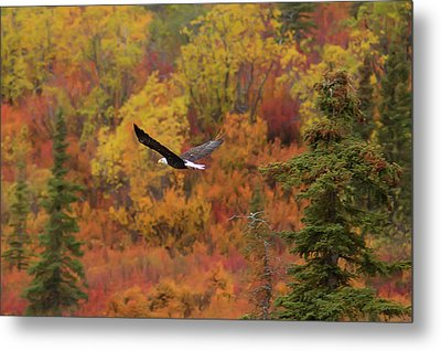 Glide Path Metal Print by Ed Boudreau