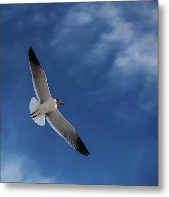 Glider Metal Print by Don Spenner