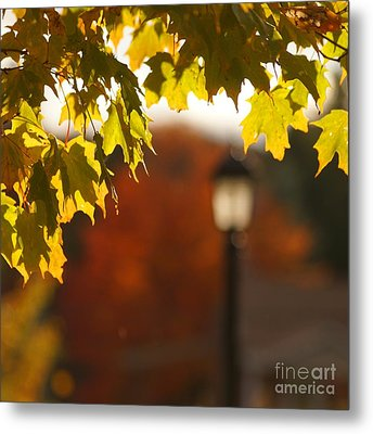 Metal Print featuring the photograph Glimpse Of Autumn by Aimelle