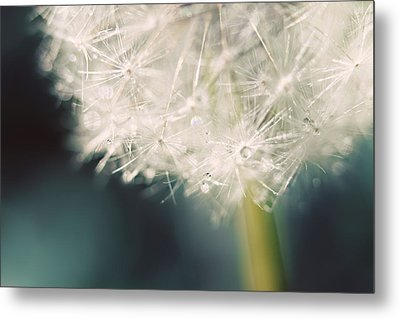 Metal Print featuring the photograph Glisten by Amy Tyler