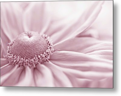 Gloriosa Daisy In Pink  Metal Print by Sandra Foster