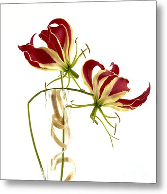 Gloriosa Lily. Metal Print by Bernard Jaubert
