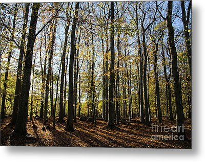 Metal Print featuring the photograph Glorious Forest by Kennerth and Birgitta Kullman