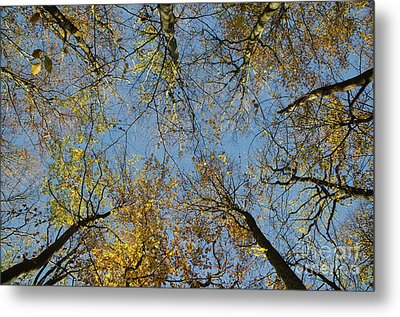 Metal Print featuring the photograph Glorious Tree Tops by Kennerth and Birgitta Kullman