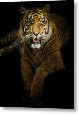 Glory Metal Print by Cheri McEachin