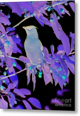 Metal Print featuring the photograph Glowing Cedar Waxwing by Smilin Eyes  Treasures